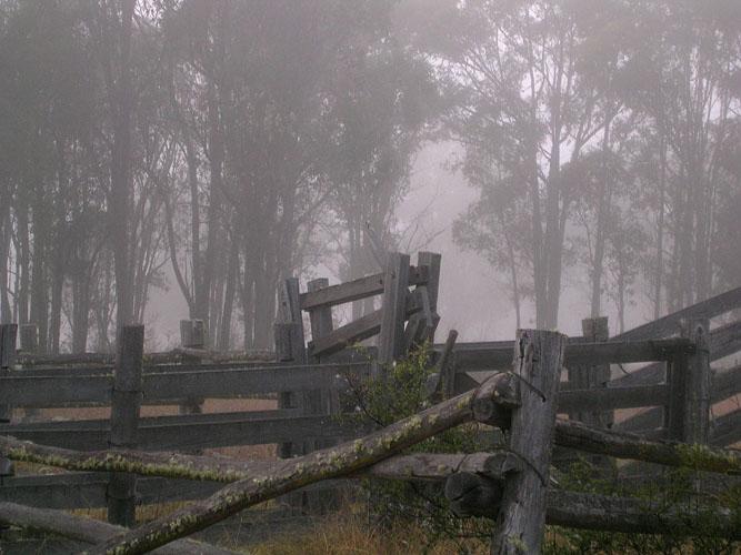 20040419-007-misty.jpg