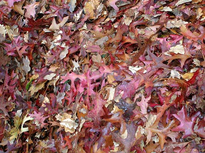 20040430-007-leaves.jpg