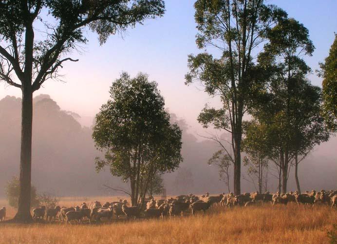 20040506-020-sheepMist-2.jpg
