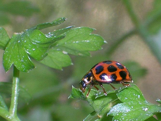 20040509-012-ladybird-2.jpg