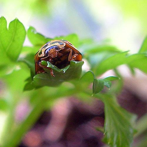 20040515-059-ladybird.jpg