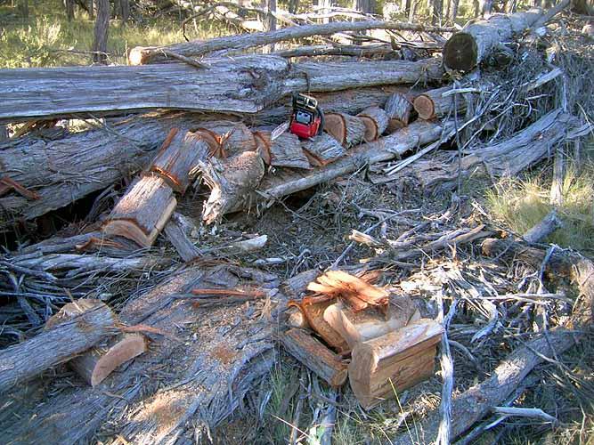 20040516-017-firewood-2.jpg