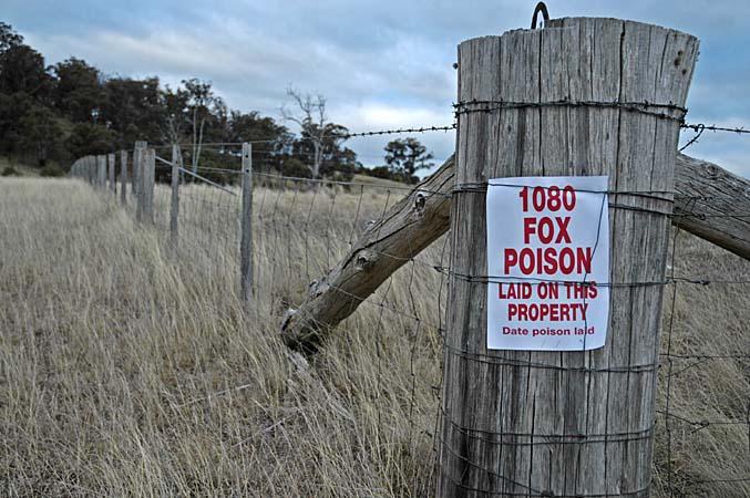 Fox poison