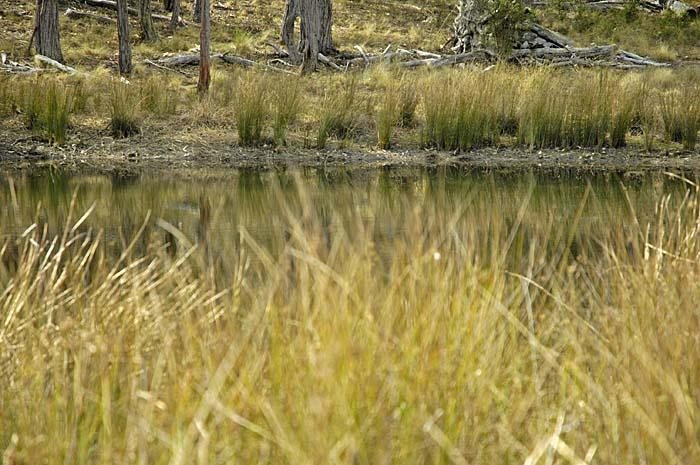 Dam where the local wildlife congregates