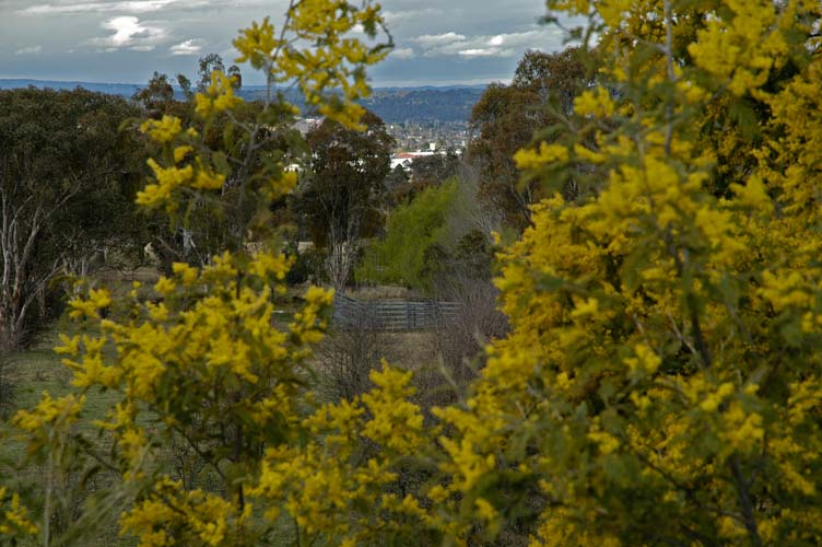 Armidale glimpsed through the trees
