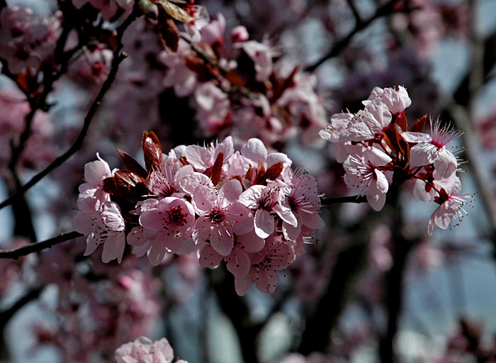 Blossoming spring