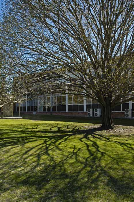 Tree plus shadow on lawn