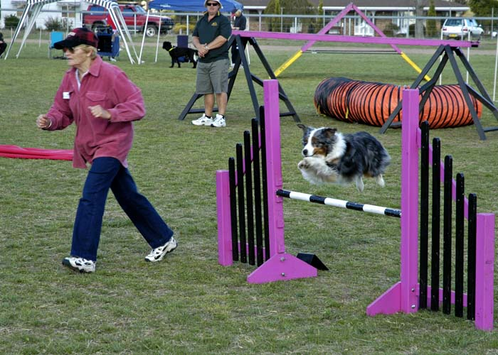 At the dog agility trials