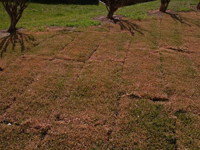 New turf drying out; too dry?