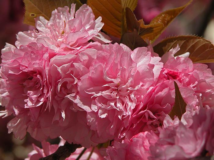 Blossom - detail