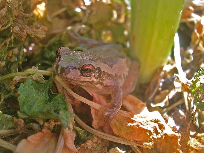 Frog in flower pot