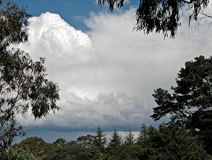 Clouds over trees 2