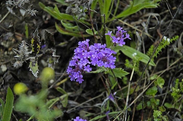 Creekside flower (or weed)