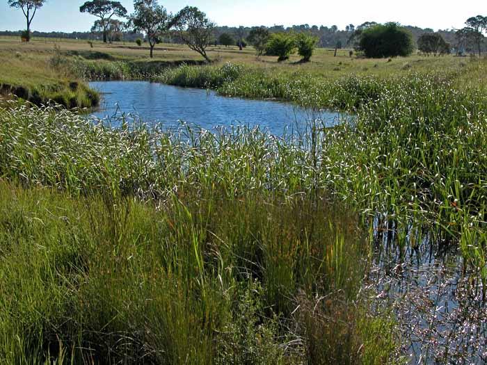 Saumarez Creek