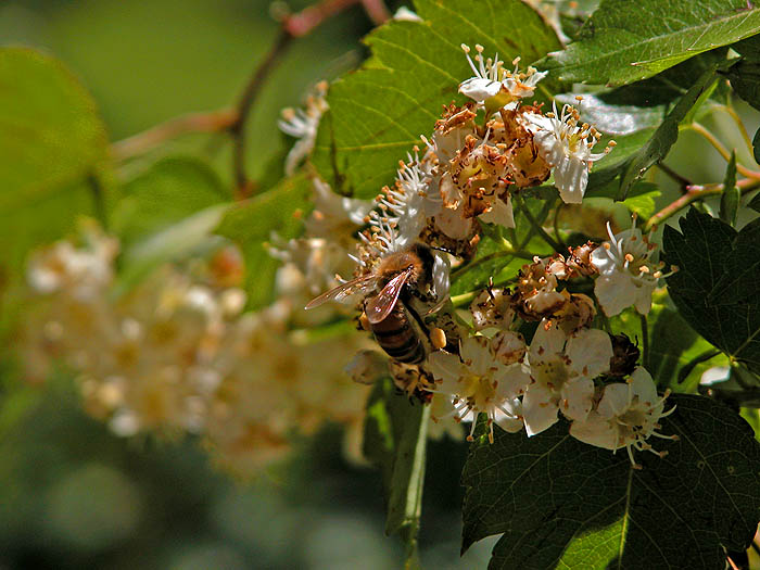 Bees are still busy
