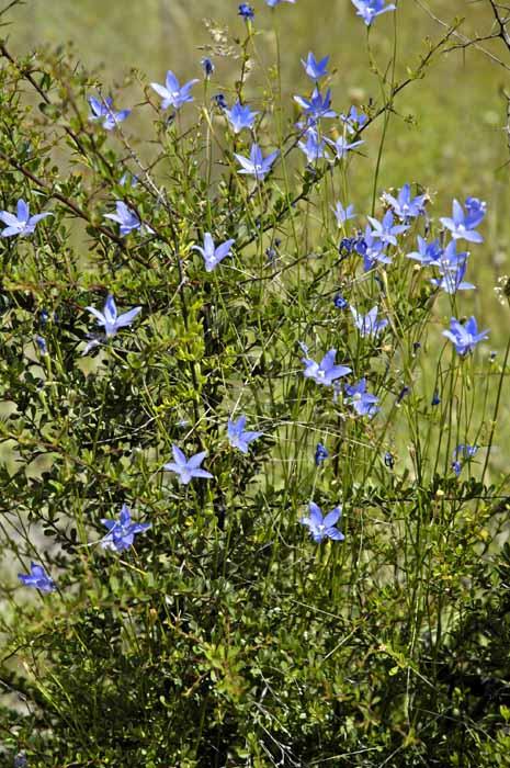 Flowers amongst the blackthorn bush