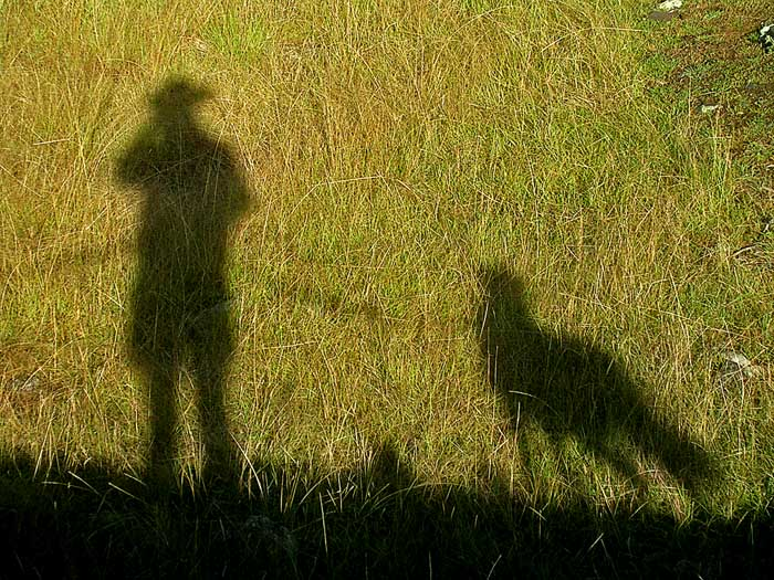 Man and dog in shadow