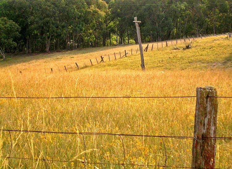 Rural-scape: grassland, fence, old power pole