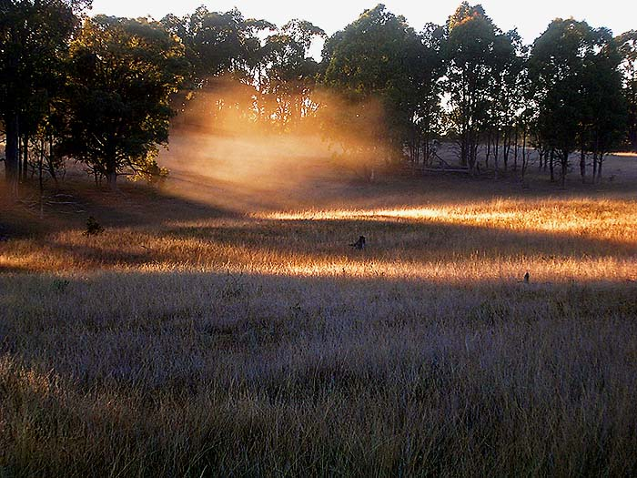 Mist rises like a golden breath