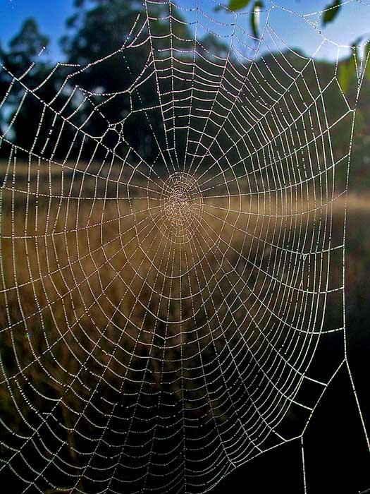Moisty, post-mist, web