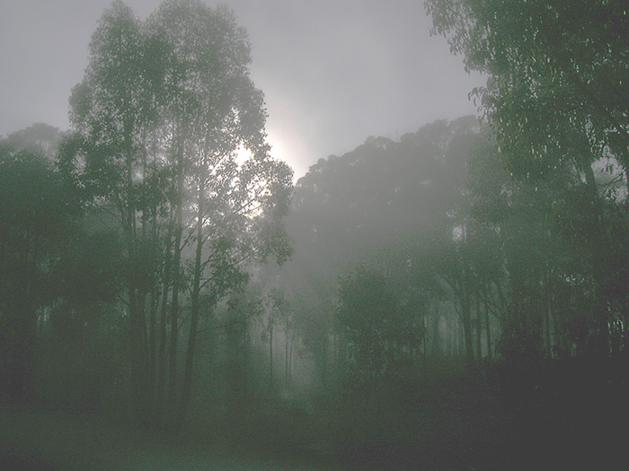 Morning light creeping through the trees
