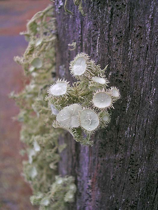 Lichen on fencepost