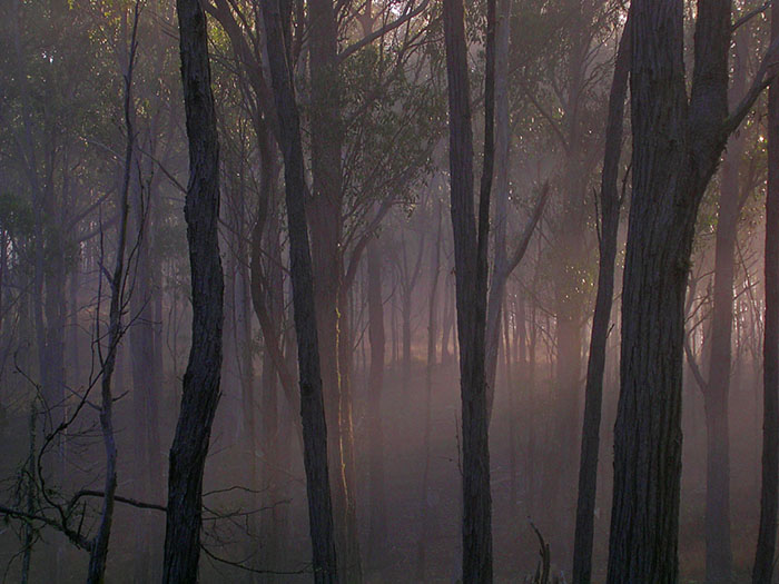Sunrise, and mist in the trees