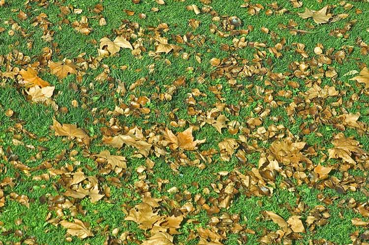 Brown leaves, green lawn