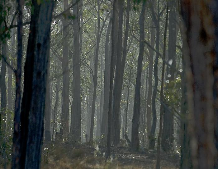 Mist in woods