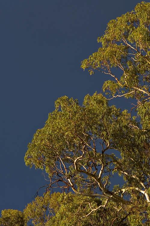 Black sky, sunlit tree