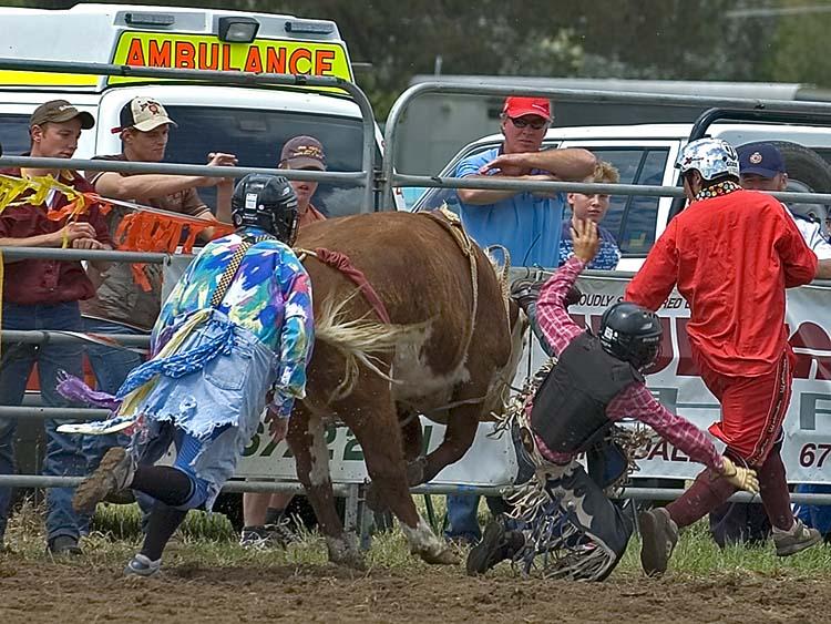 Dismount steer's back