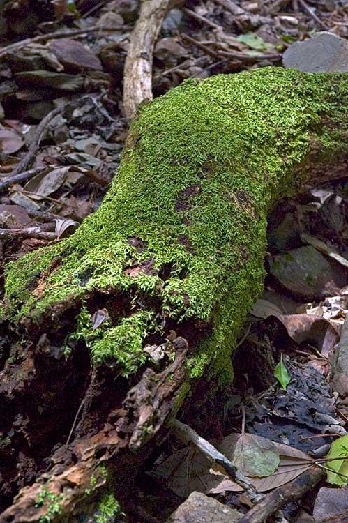 Moss on log in rainforest