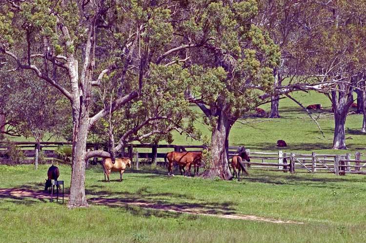 Horse paddock at Kunderang