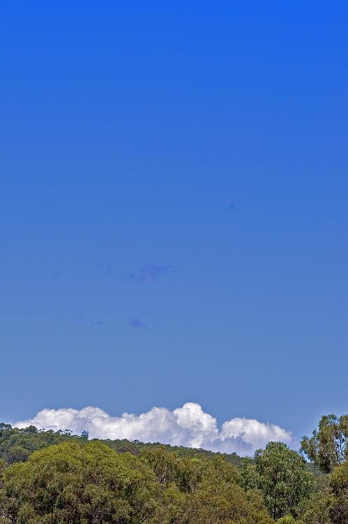 Storm clouds peeking over treeline