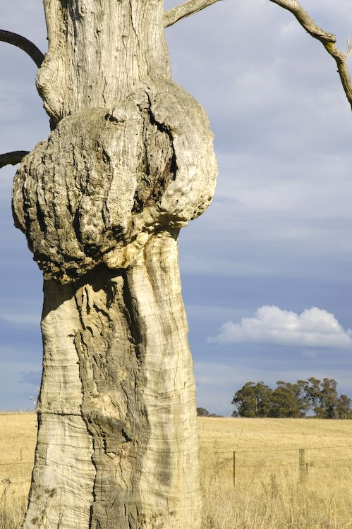 Contorted tree