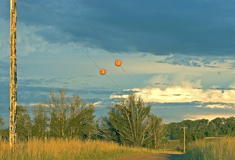 Orange warning balls