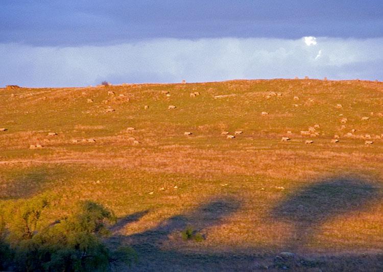 Orange grasses