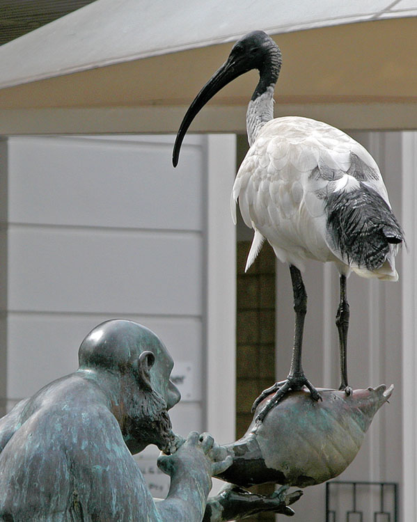 Ibis on fountain