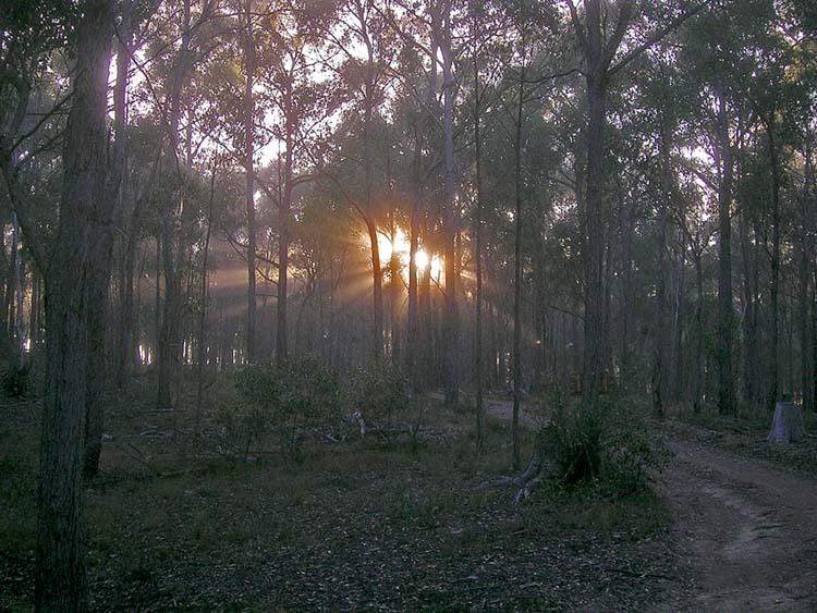 Rising sun through trees