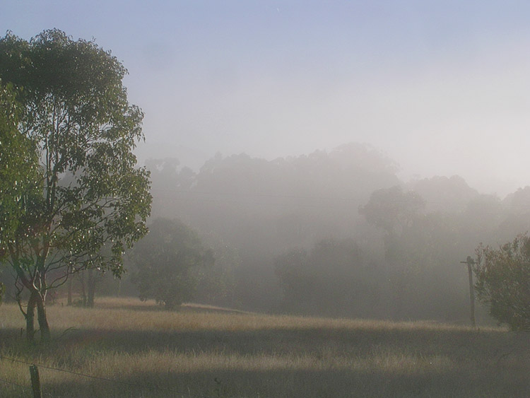 Mist hanging in the trees