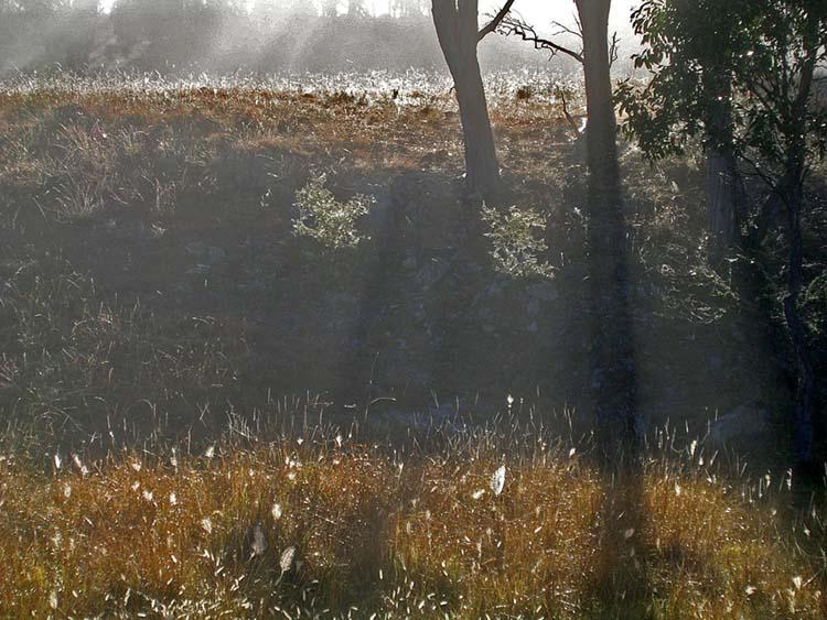 Backlit mist