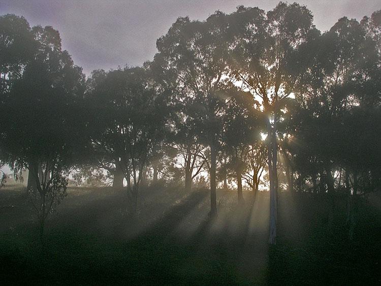 Mist, backlit