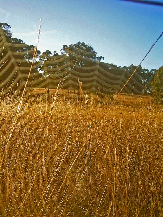 Grasses through web