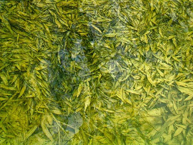 Underwater leaves