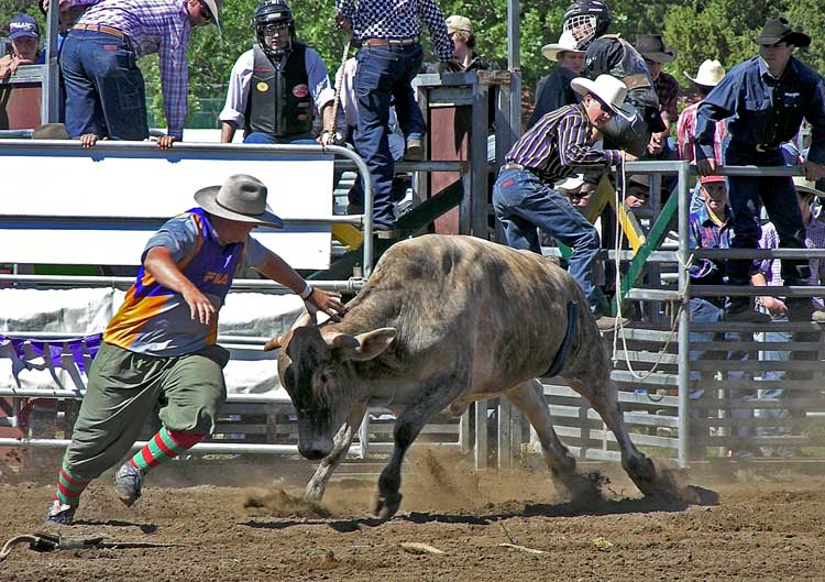 Rodeo clown dodges bull