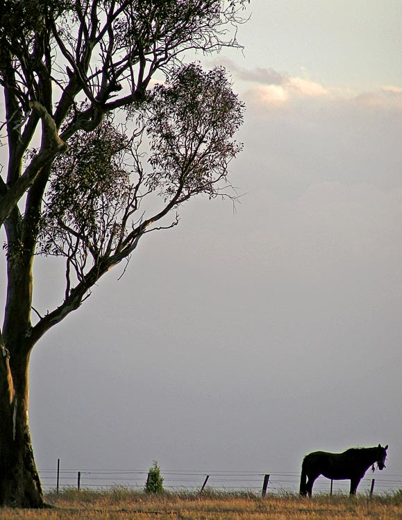 Tree and horse