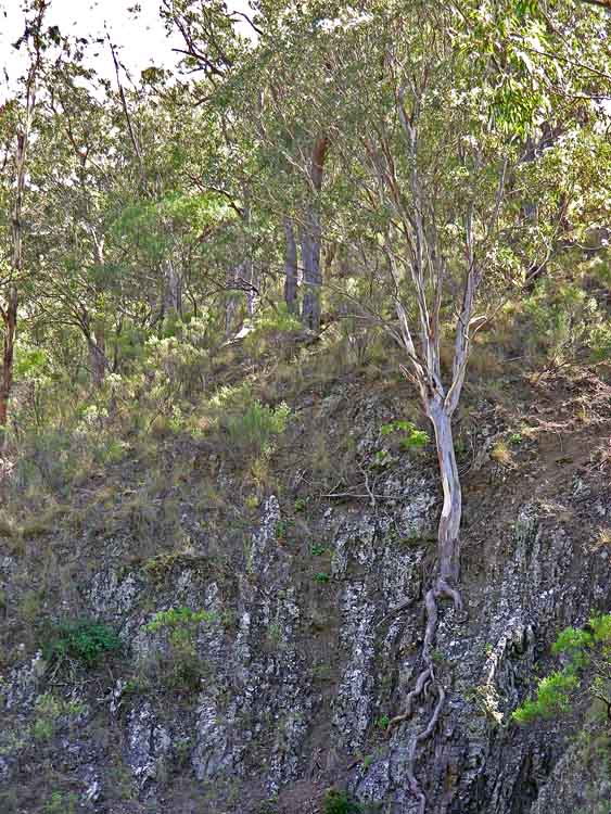 Tree growing from cliff face