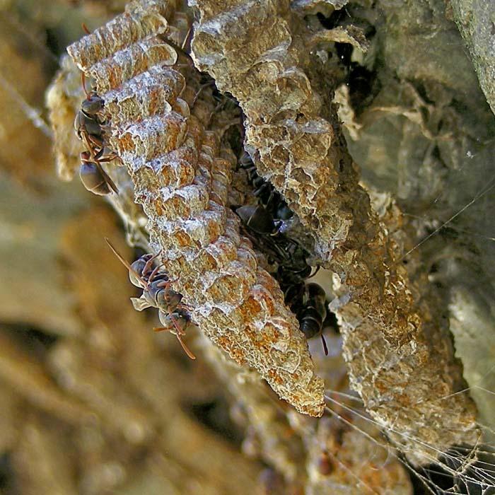 Detail of native bees at honeycomb
