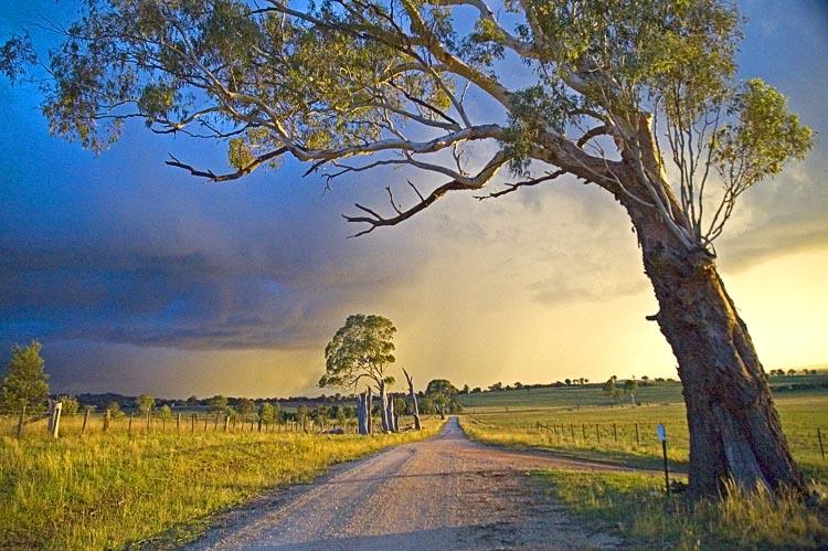 Tree leaning across road