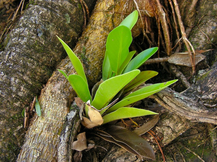 Orchid on tree root